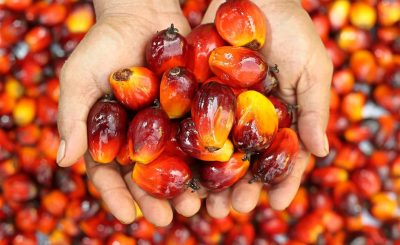 RSPO (Rountable Sustainable palm Oil) & ISPO (Indonesia Sustainable Palm Oil)